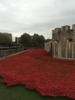 the kollektive tower of london poppy
