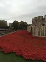 the kollektive tower of london poppy