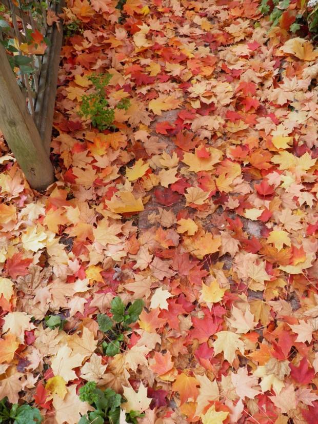 Toronto - Christie Pits - Fall