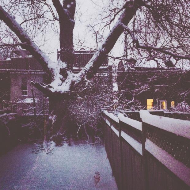 The Kollektive photography snow