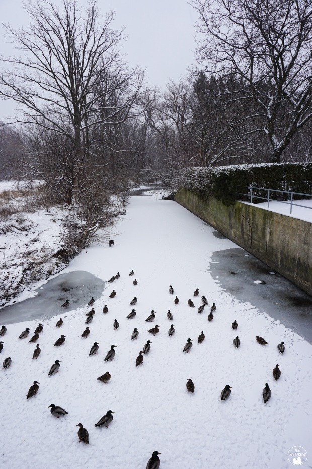 thekollektive_cooksville_park_winter_02