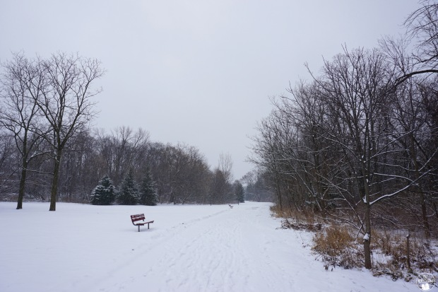 thekollektive_cooksville_park_winter_03