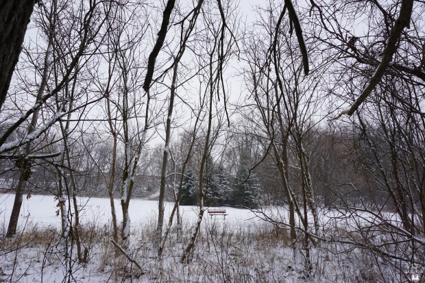 thekollektive_cooksville_park_winter_05