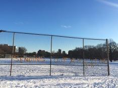 Trinity Bellwoods in Winter