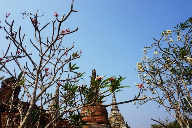 TheKollektive_Ayutthaya_68