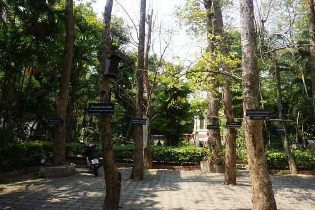 TheKollektive_ChiangMai_wat_phra_singh_33