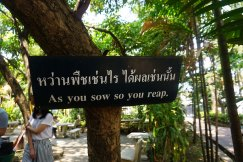 TheKollektive_ChiangMai_wat_phra_singh_34
